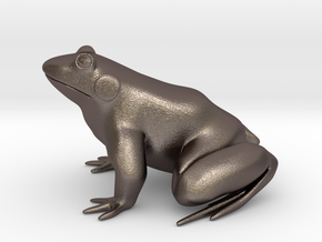 Frog, solid in Stainless Steel