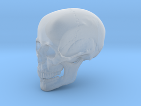 Non-scale Hollow Human Skull  in Smooth Fine Detail Plastic