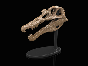 Spinosaurus Skull in White Strong & Flexible