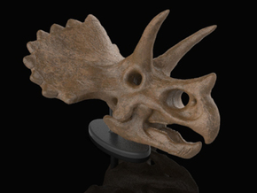 Triceratops Skull in White Strong & Flexible: Small