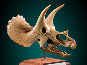 Triceratops - dinosaur skull replica in White Strong & Flexible: 1:24