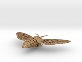 Death's-head Hawkmoth in Polished Brass