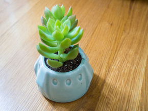 Baby Dragon Succulent in Gloss Celadon Green Porcelain