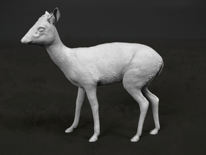 Kirk's Dik-Dik 1:35 Standing Male in Frosted Extreme Detail