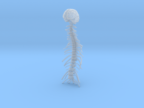 1/18 Brain and Spine in Smoothest Fine Detail Plastic