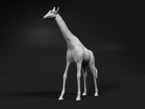 Giraffe 1:72 Standing Male in Smooth Fine Detail Plastic