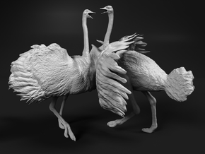 Ostrich 1:12 Fighting Pair in White Natural Versatile Plastic