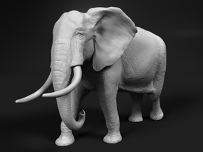 African Bush Elephant 1:9 Walking Male in White Natural Versatile Plastic