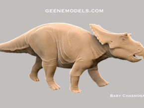 Baby Chasmosaurus 1:35 v1 in White Strong & Flexible
