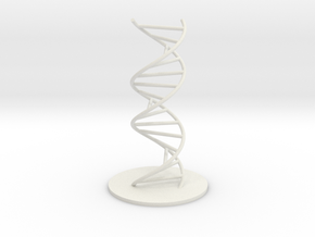 DNA Molecule Model Ladder. Sizes. in White Strong & Flexible: 1:10
