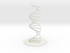 DNA Molecule Hollow, Large, 3 Sizes. in White Natural Versatile Plastic: 1:30