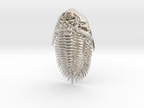 Trilobite Pendant in Rhodium Plated Brass
