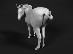 Plains Zebra 1:48 Looking Male in White Natural Versatile Plastic