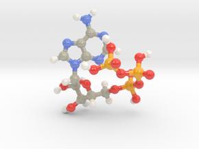 Adenosine Triphosphate (ATP) in Glossy Full Color Sandstone