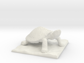 Turtle Pawn  in White Natural Versatile Plastic