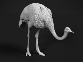 Ostrich 1:25 Head Down in White Natural Versatile Plastic