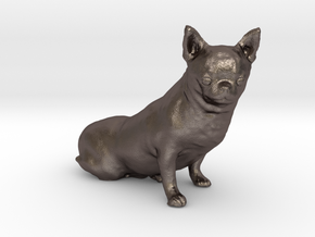 Scanned Chihuahua Dog -888 in Polished Bronzed Silver Steel
