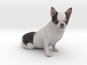 Scanned Chihuahua Dog -888 in Full Color Sandstone