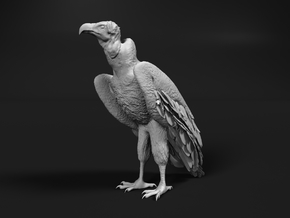 Lappet-Faced Vulture 1:25 Standing in Smooth Fine Detail Plastic