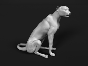 Cheetah 1:20 Sitting Male in White Natural Versatile Plastic
