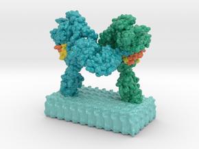 Insulin Receptor Complex in Glossy Full Color Sandstone: Small