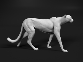 Cheetah 1:18 Walking Male 1 in White Natural Versatile Plastic