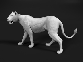 Lion 1:35 Walking Lioness 1 in White Natural Versatile Plastic