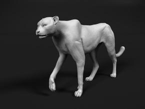 Cheetah 1:25 Walking Male 3 in White Natural Versatile Plastic