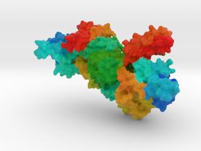 Tryptophanyl-tRNA Synthetase in Full Color Sandstone