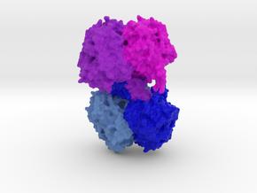β-Ketothiolase (PhaA) in Full Color Sandstone