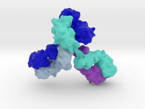 Immunoglobulin Antibody in Full Color Sandstone