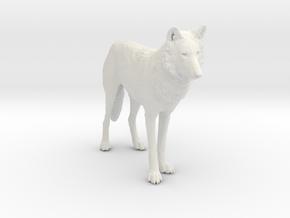 North American Gray Wolf in White Premium Versatile Plastic