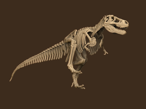 Tyrannosaurus Skeleton Sue 40 cm long.  in White Natural Versatile Plastic