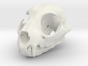 Bobcat Skull - Closed Jaw Statue in White Natural Versatile Plastic