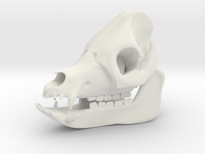 Pig Skull 3D Printed Model in White Natural Versatile Plastic