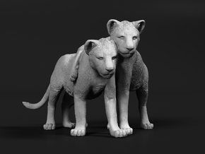 Lion 1:45 Cubs distracted while playing in Smooth Fine Detail Plastic