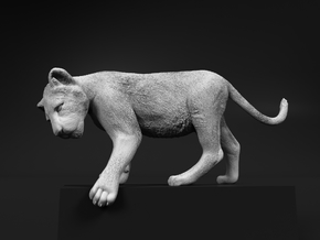 Lion 1:12 Cub reaching for something in White Natural Versatile Plastic