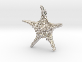 Knobby Starfish Pendant (Small, Solid) in Platinum