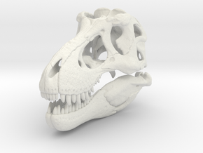 Tyrannosaurus skull - dinosaur model in White Natural Versatile Plastic: 1:24