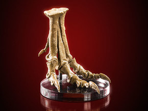 Tyrannosaurus - dinosaur foot replica in White Natural Versatile Plastic: 1:20