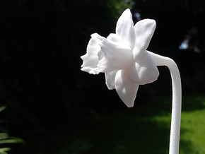 Desktop Daffodil in White Strong & Flexible