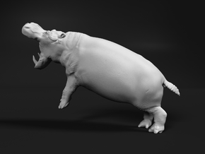 Hippopotamus 1:35 Fighting Males split part 2/2 in White Natural Versatile Plastic
