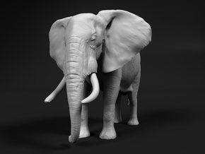African Bush Elephant 1:20 Standing Male in White Natural Versatile Plastic