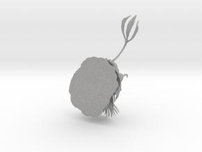 Trilobite - Walliserops Trifurcatus in Aluminum