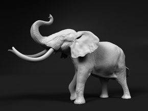 African Bush Elephant 1:20 Aggressive Male in White Natural Versatile Plastic