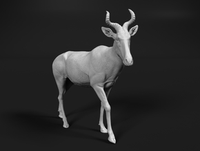 Coke's Hartebeest 1:35 Walking Male in White Natural Versatile Plastic
