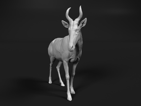 Western hartebeest 1:32 Standing Male in White Natural Versatile Plastic