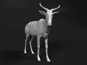Tora Hartebeest 1:22 Standing Male in White Natural Versatile Plastic