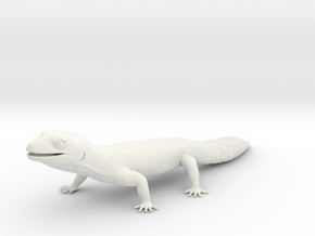 Leopard Gecko - Life Sized Model  in White Natural Versatile Plastic