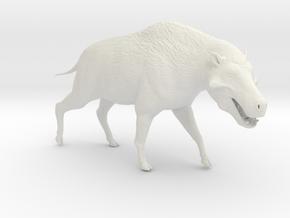 Daeodon 1/40 or 1/25 Scale Model in White Natural Versatile Plastic: Small